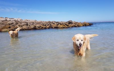 Pet Friendly Places: Where To Take Your Furbaby