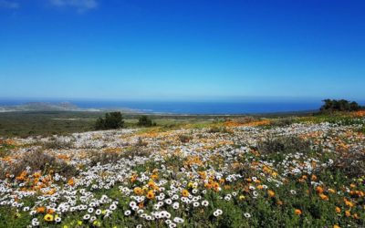 South Africa's Hidden Gem – West Coast National Park