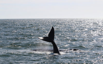 Whale of a Time: Where to Whale Watch This Season