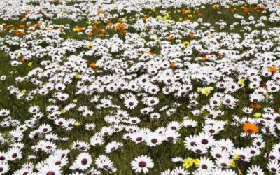A West Coast Wildflower Wonderland