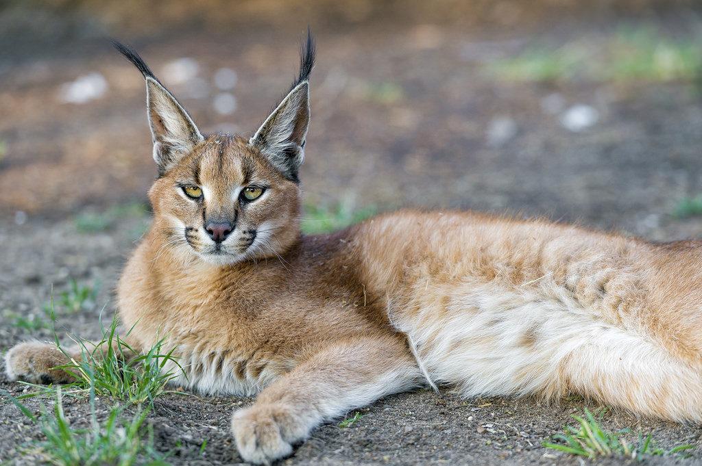 tenikwa wildlife centre