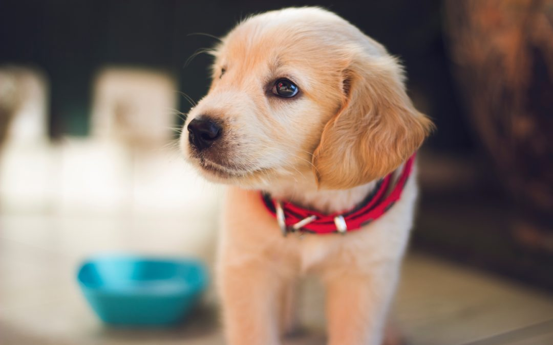 Making Sure Pets are Not Just for Christmas