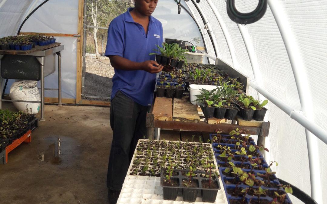 Nurseries and Nurturing: Village n Life Intern Talks About His Experience